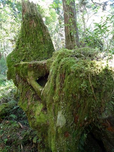 20130909-太平山-原始森林步道 (8)-H4118