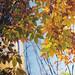 Fall in Seoul (film)