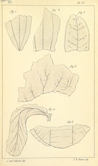 Image taken from page 423 of 'Some Inquiries in the Province of Kemaon, relative to Geology, and other branches of natural science'