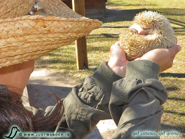 PIC: Holding a hedgehog at Giraffe Ranch