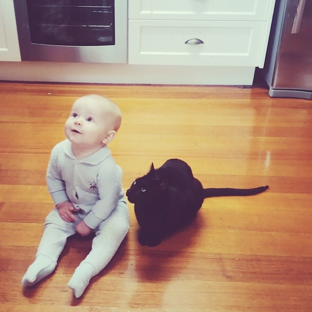 #babyjagoe & #atticuskitty hanging out