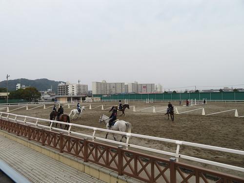 小倉競馬場の角馬場での練習の様子