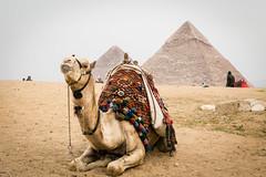 A break at the pyramids