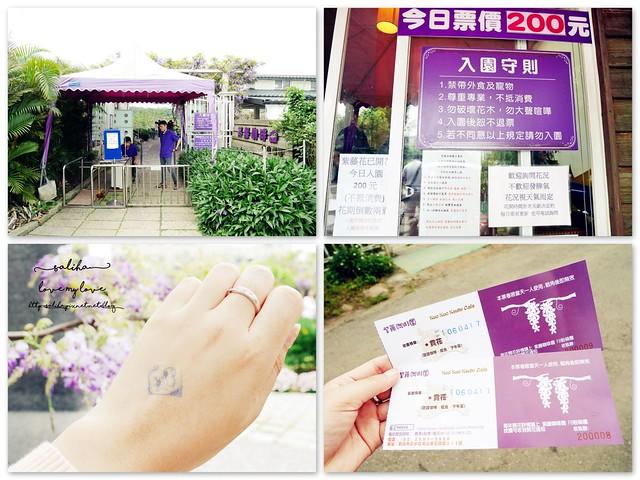 新北淡水三芝紫藤咖啡園夢幻紫色隧道 (50)
