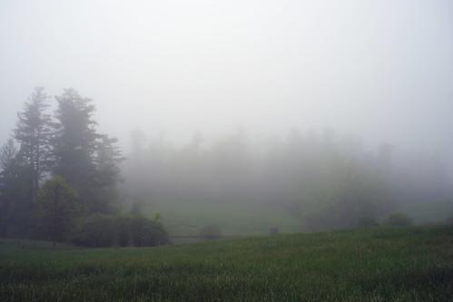 fog mist nebel trees landscape rural northcarolina summer morning