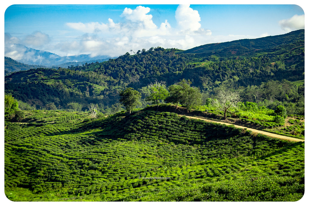 Borneo-20170410-IMG_7210