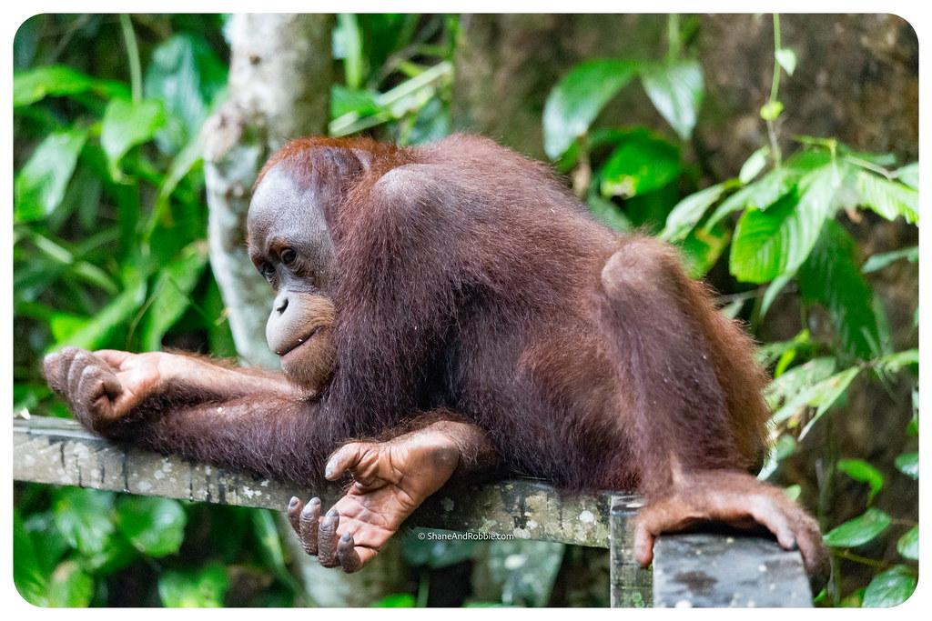 Borneo-20170413-IMG_7949