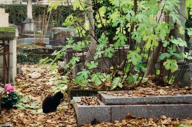 Cemetery cats - analog Paris