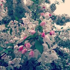 Därute blommar våren över till sommar medan jag är oförmögen