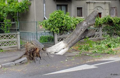 Copacul rasturnat(3) by cdnh