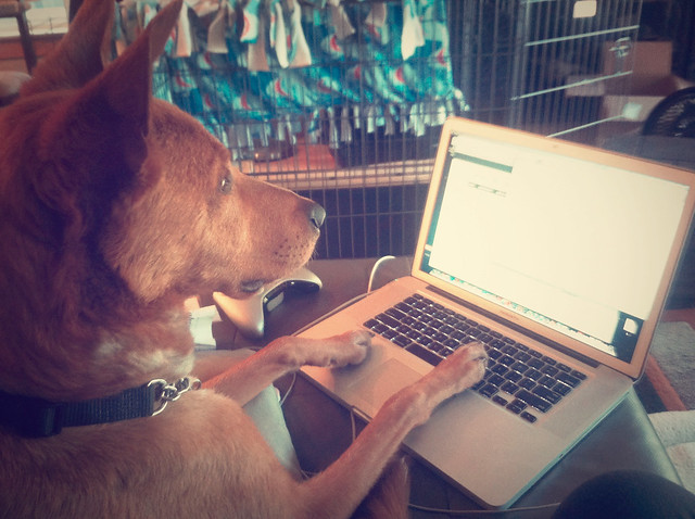 Dog on a computer