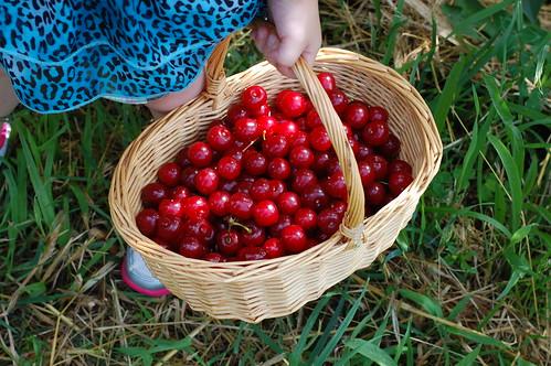 Sour Cherries | www.puresugar.net