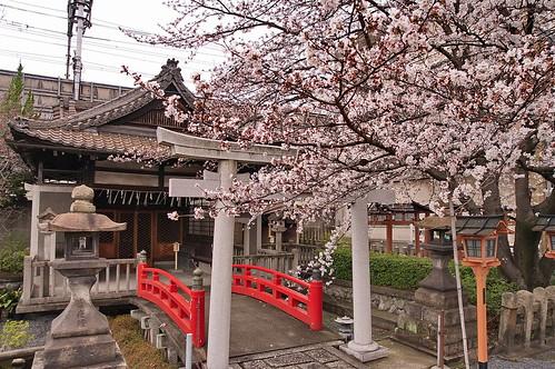【写真】桜 : 六孫王神社