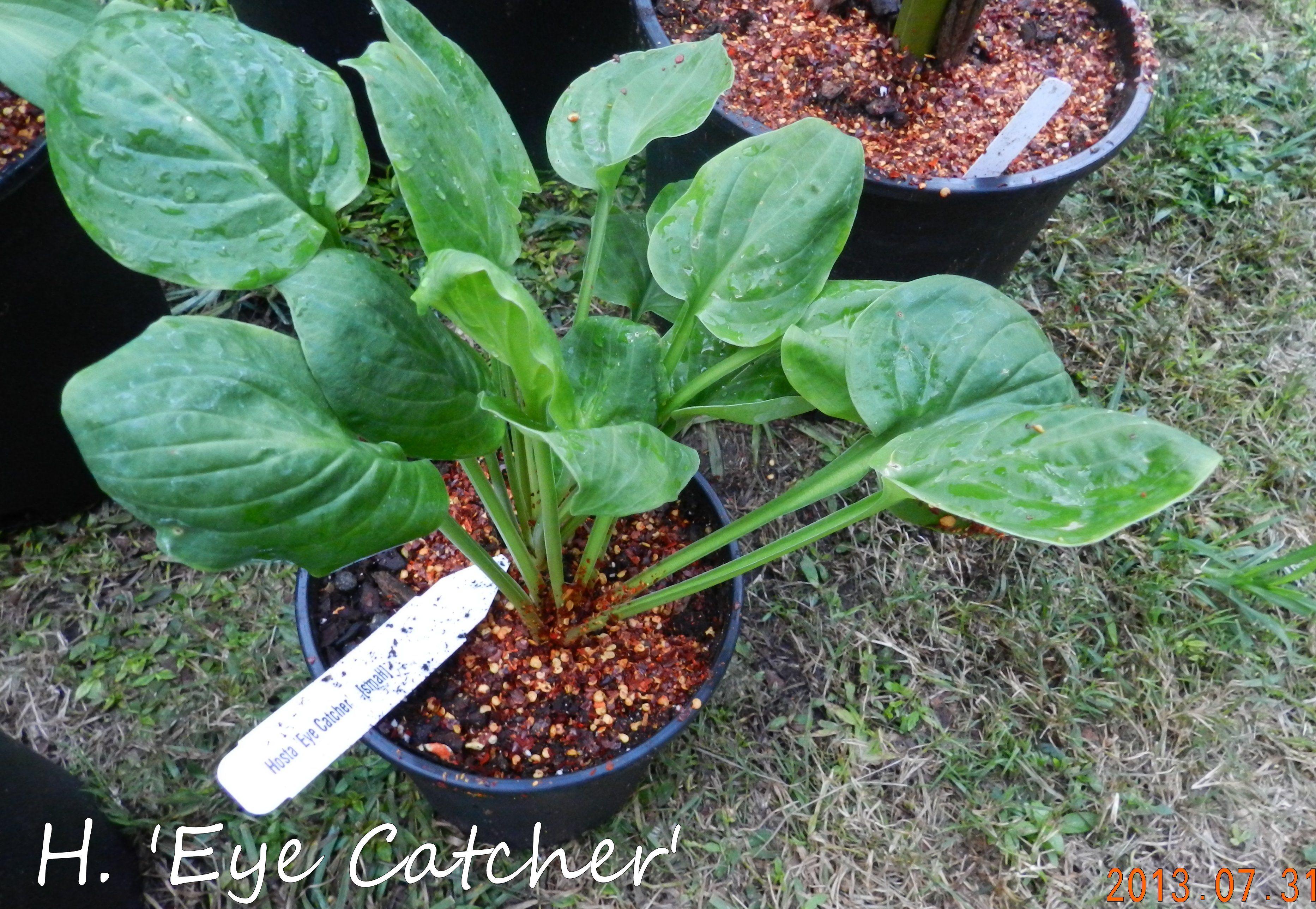 Garden13July0510