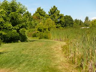 Garden Marsh