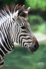Zootour 2013_08_14