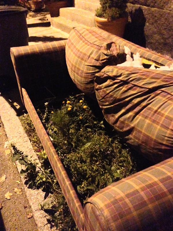 Street Couch Grows a Garden