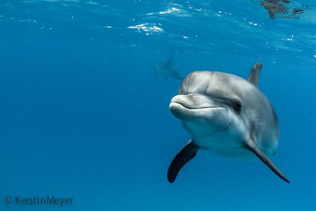 dolphin smile :)