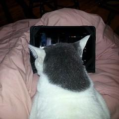 Geek kitty ~ Penn 'helping' me watch an episode of Star Trek.