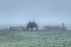 2010 09 21 Mist in Schalkwijk