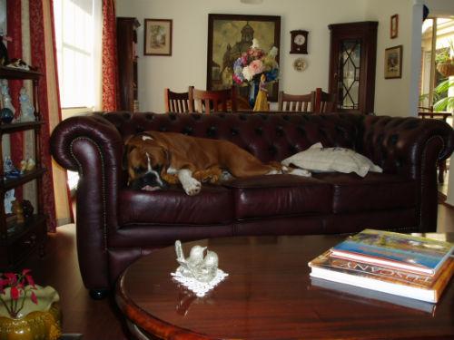 Zeus in his new home