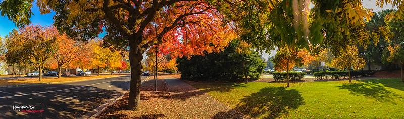2013-11-10 Autumn-5151