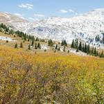 Fall Color, Colorado, Sept. 2013