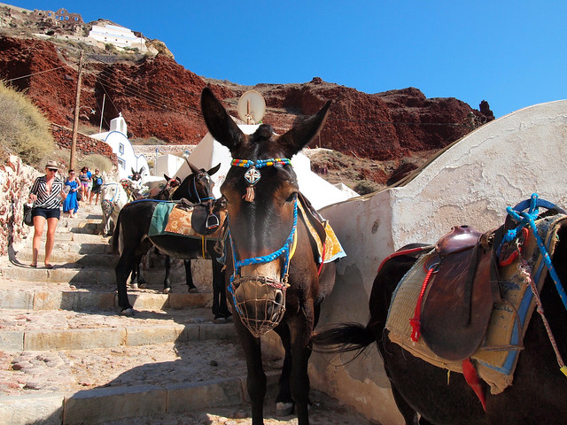 Donkeys in Oia, Santorini