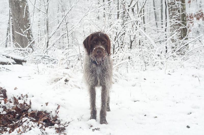131210_snowwoodshp_061