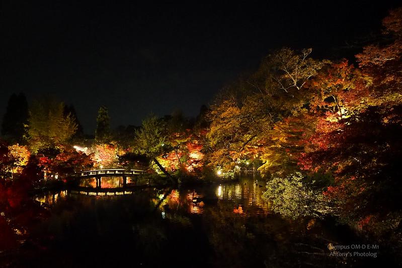 永觀堂夜楓 | 京都洛北
