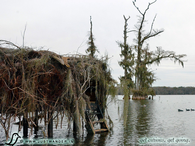 PIC: Cajun Country Swamp Tour - Duck Blind