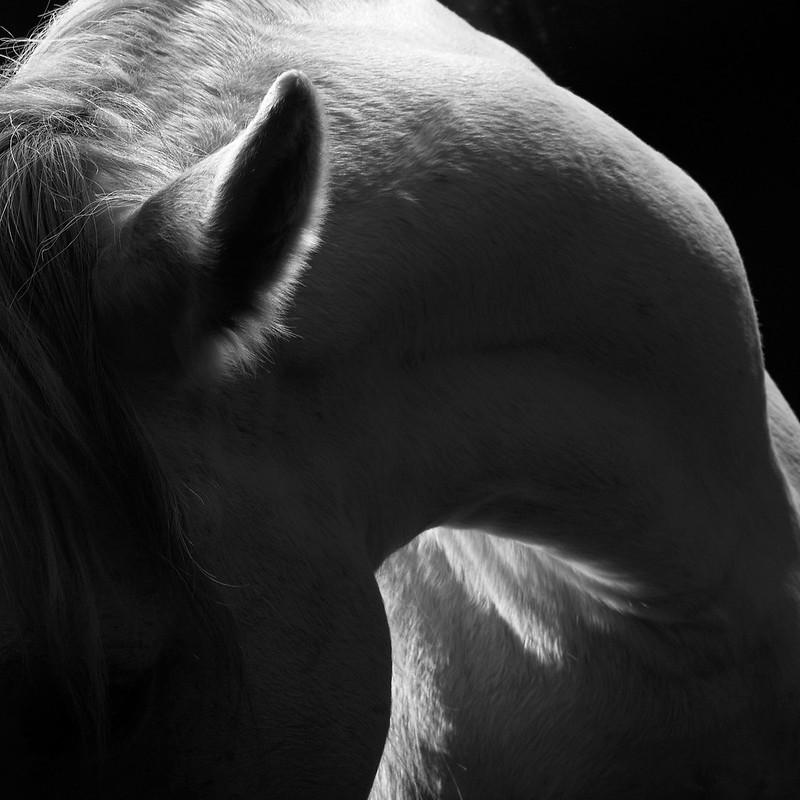 horse_A.P (11)