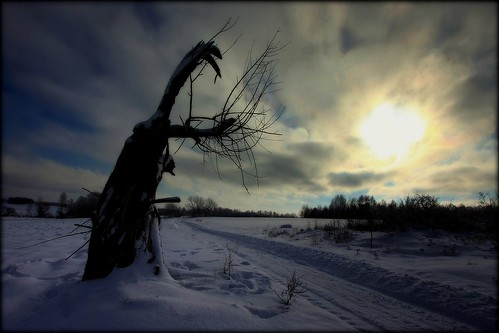 road morning winter sky sun snow tree sunrise canon landscape drohiczyn cesarz marcelxyz