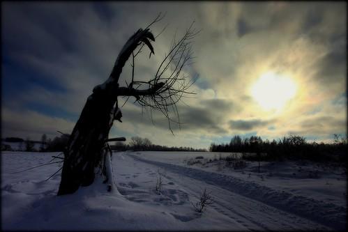 road morning winter sky sun snow tree sunrise canon landscape drohiczyn cesarz marcelxyz