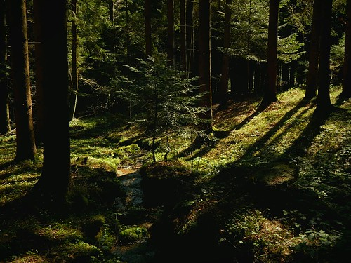 Deep in the forest / Tief im Wald