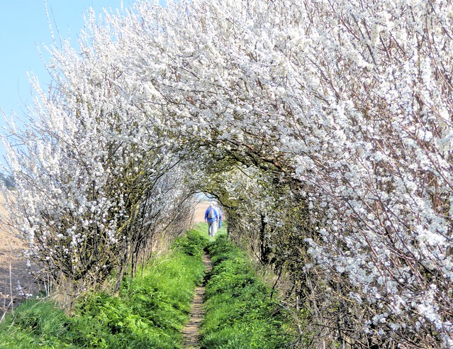 Springtime at Bockhill, Panasonic DMC-TZ70