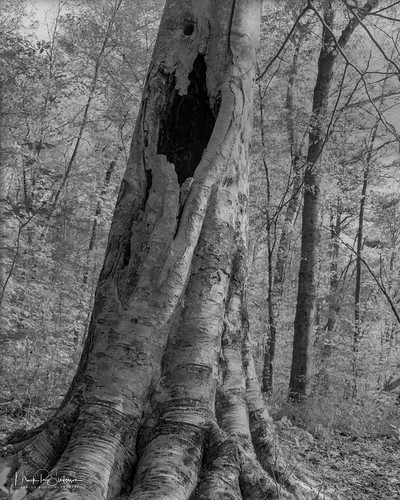 4x5 blackandwhite camerabodies chamonix045f1 developer developing film ga georgia ilfordfp4 kodakhc110 landscape largeformat4x5 lenses nikkorw135mmf56 northamerica shadow shadows trees us usa unitedstates bw