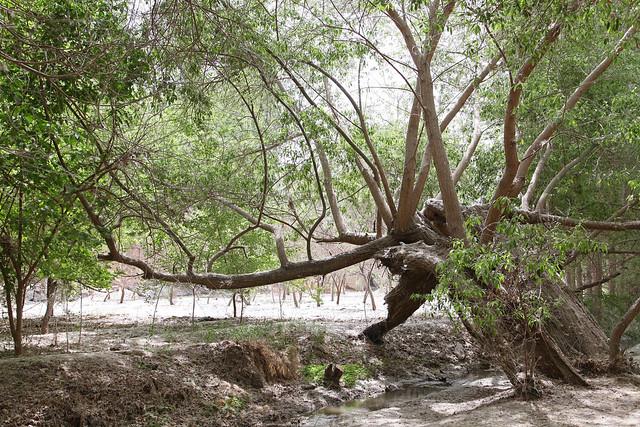 Quiet forest in Kumul (Hami) ハミ、静かな森