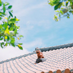2013#102 HASSELBLAD *500CM + Carl Zeiss Sonnar 150mm F4.0 T* + Kodak PORTRA 400 @Itoman, OKINAWA. JAPAN.  July.6, 2013