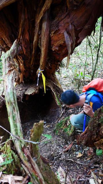 树根下很多小动物栖息过的痕迹.