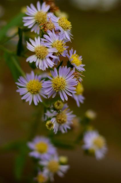 Bouquet of flowers [Nikon][D7000][50mm F 1.8 AF-D][India]