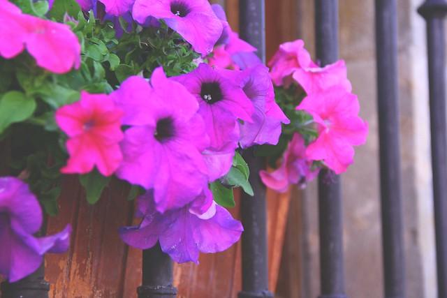 balcony flowers ciudad rodrigo