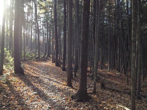 park new autumn trees light fall brunswick moncton mapleton