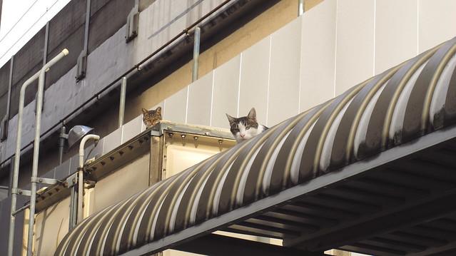 『catzElysium〜高架下の猫』の画像