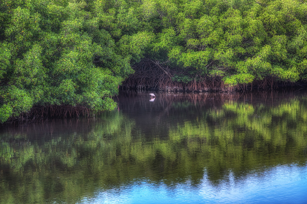 Pinellas County Florida  Weedon Island Preserve  Preserve