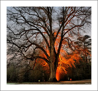 L'arbre en feu....