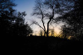 Shadows- Northern Ireland