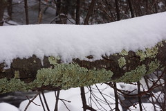 Tales of Lichen and Snow