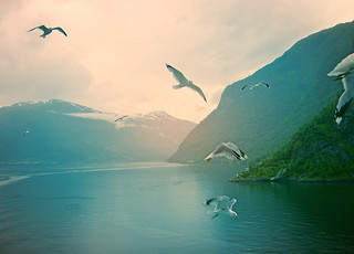 Free and fjords