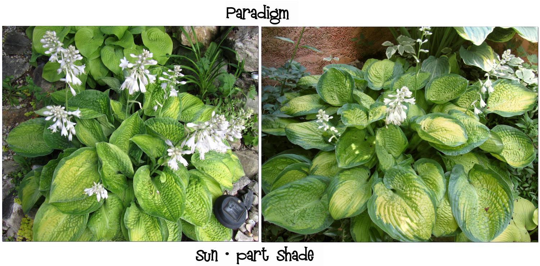 Paradigm 1  7-12-13 (27)